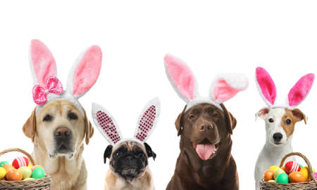Colorful Easter eggs and cute dogs with bunny ears headbands on white background, collage