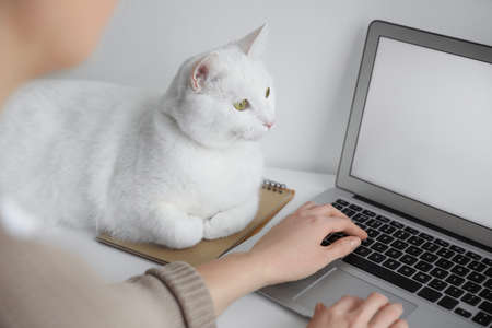 Woman working while her cat relaxing near laptop on table, closeup
