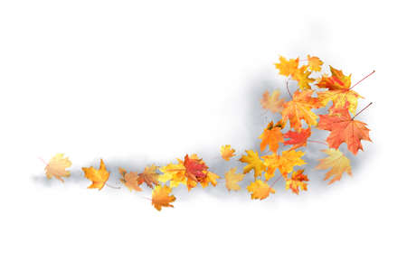 Many autumn leaves moving by gust wind on white background Фото со стока