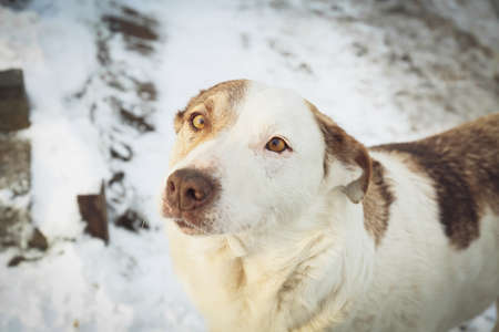Homeless dog outdoors on winter day. Abandoned animal