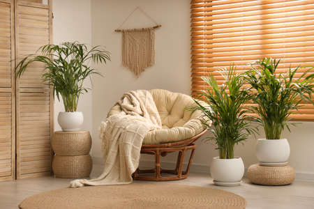 Exotic house plants with comfortable armchair in room interior