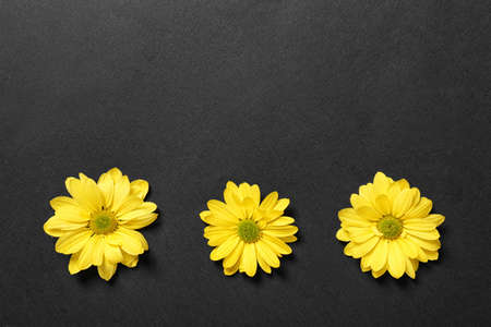 Yellow flowers on black background, flat lay. Space for text