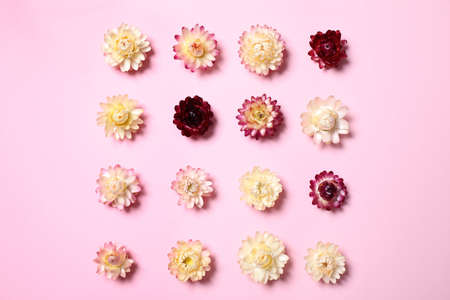 Flat lay composition with beautiful flowers on pink  background Reklamní fotografie