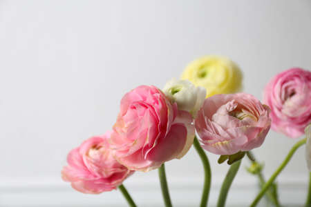 Beautiful ranunculus flowers on light background, closeup. Space for text