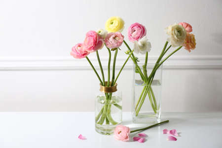 Beautiful ranunculus flowers in vases on white table near wall