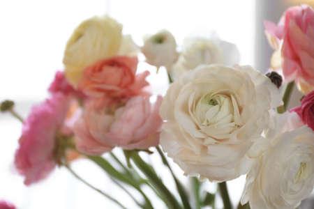 Beautiful ranunculus flowers on light background, closeup