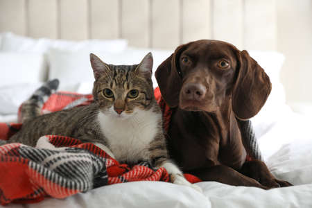 Adorable cat and dog together on plaid indoors