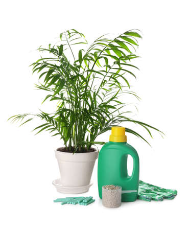 Beautiful house plant, different fertilizers and gloves on white background
