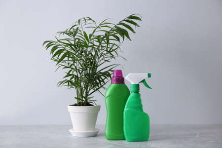 Beautiful house plant and bottles of fertilizers on grey marble table