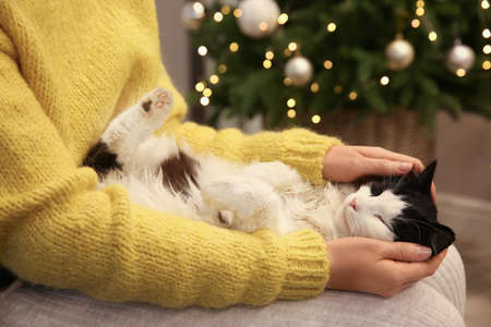 Woman stroking adorable cat in room with Christmas tree, closeup