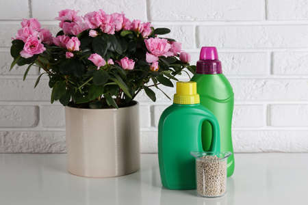 Beautiful house plant and different fertilizers on table against white brick wall