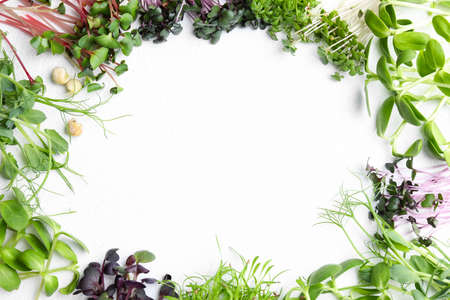 Frame made with different microgreens on white table, flat lay. Space for text