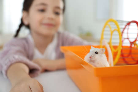 Little girl playing with cute hamster at home, focus on hand