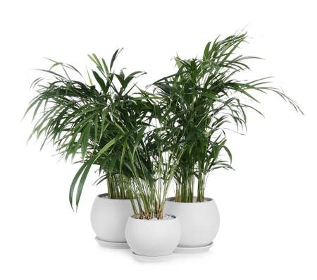 Beautiful exotic house plants on white background