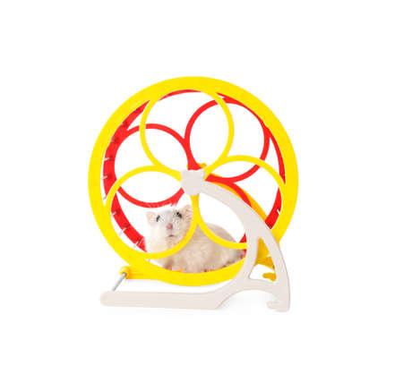 Cute funny hamster running in wheel on white background