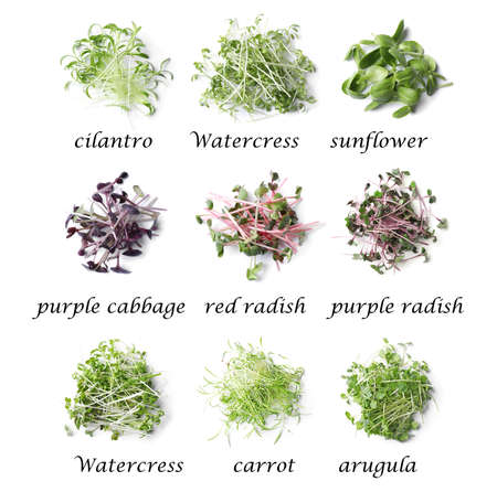 Set of different fresh microgreens on white background, top view