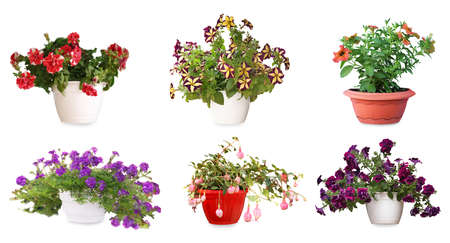 Collection of beautiful flowers in pots on white background. Banner design Stock Photo