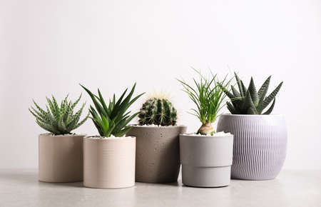 Different house plants in pots on grey table against white background
