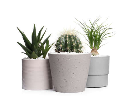 Different house plants in pots isolated on white Stock Photo