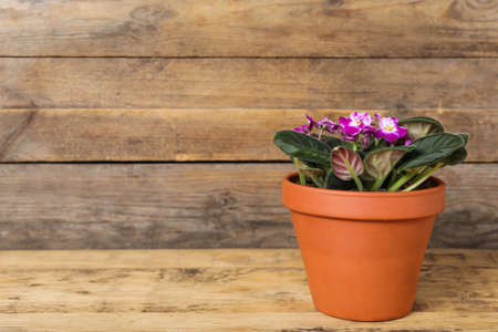 Beautiful blooming violet flower in pot on wooden table, space for text Imagens