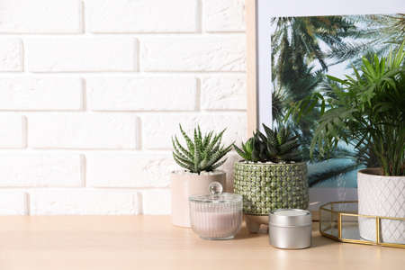 Beautiful Chamaedorea, Aloe and Haworthia in pots with decor on wooden table near white brick wall, space for text. Different house plants