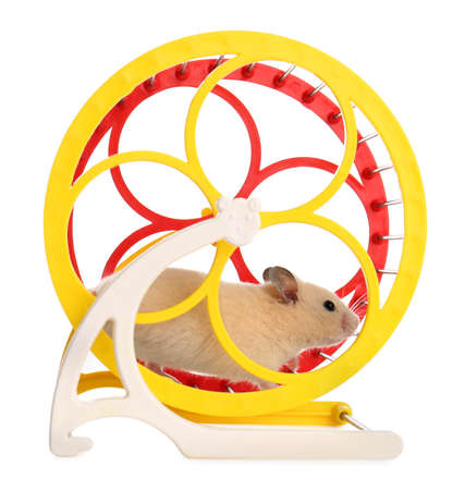 Cute little hamster in spinning wheel on white background