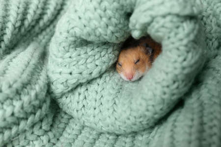 Cute little hamster in sleeve of green knitted sweater