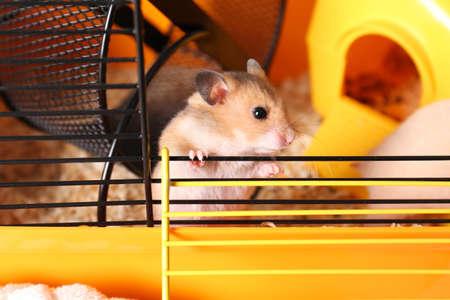 Cute little fluffy hamster inside of cage