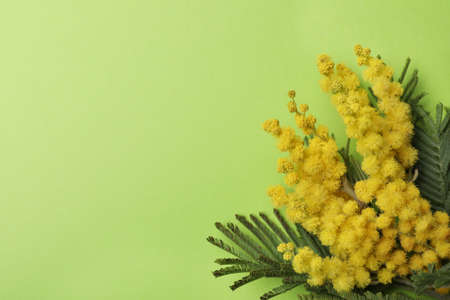 Beautiful mimosa flowers on green background, top view. Space for text Stock Photo