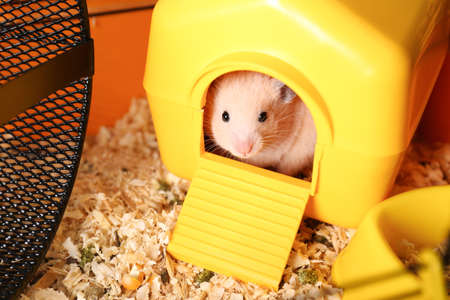 Cute little hamster inside decorative house in cage