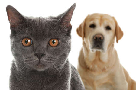 Adorable cat and dog on white background