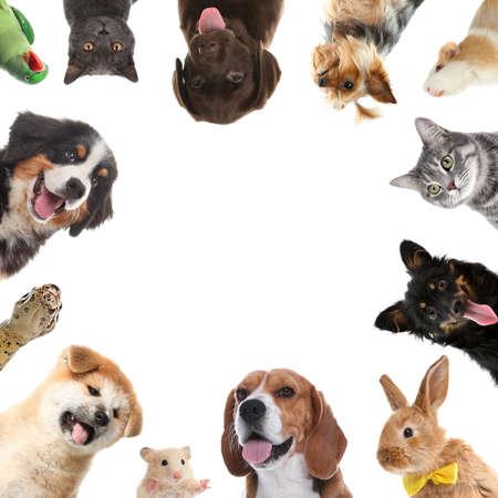 Cute different animals on white background, collage Standard-Bild