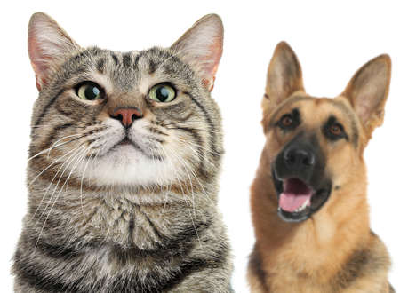 Adorable cat and dog on white background Stockfoto