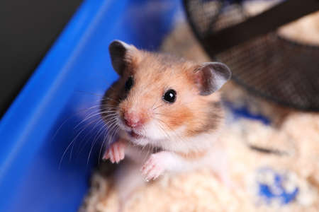 Cute little hamster in tray, closeup view Stockfoto