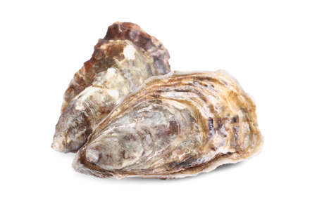 Fresh raw closed oysters on white background