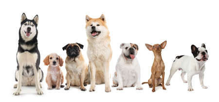 Group of different cute dogs on white background. Banner design Imagens