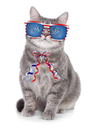 Cute cat with sunglasses and bow on white background. Concept of federal holidays in USA