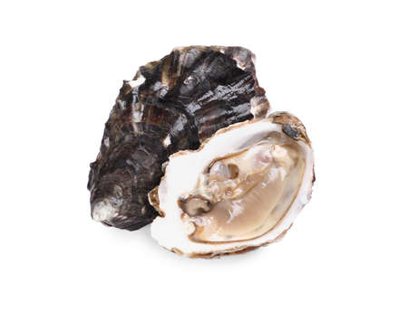 Fresh raw closed and open oysters on white background