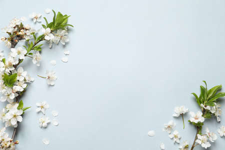 Blossoming spring tree branches as borders on light background, flat lay. Space for text