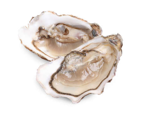 Fresh raw open oysters on white background
