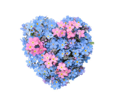 Heart made with beautiful Forget-me-not flowers isolated on white Banco de Imagens