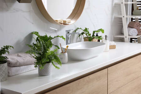 Beautiful green ferns and toiletries on countertop in bathroom