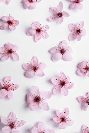 Beautiful spring tree blossoms on white background, flat lay Foto de archivo