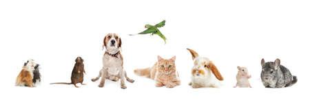 Group of different domestic animals on white background, collage. Banner design Archivio Fotografico