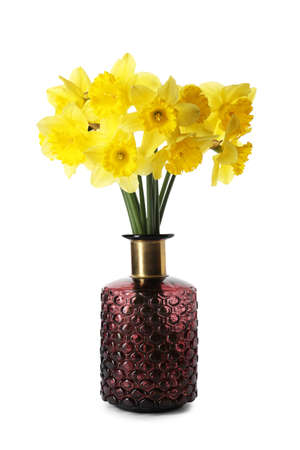 Beautiful daffodils in vase on white background