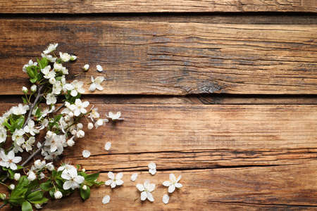 Blossoming spring tree branches as border on wooden background, flat lay. Space for text