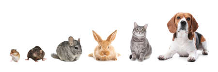 Group of different domestic animals on white background, collage. Banner design