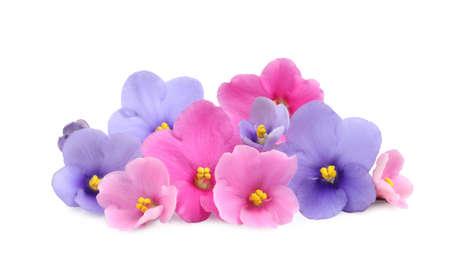 Fresh flowers of violet plant on white background Stockfoto