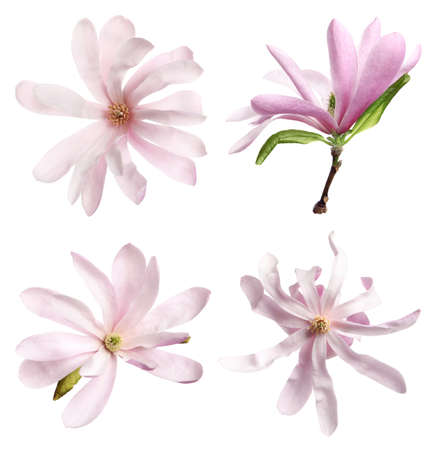 Set with beautiful magnolia flowers on white background