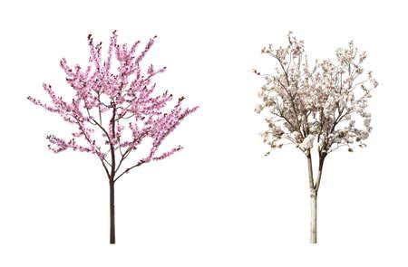 Beautiful blossoming sakura trees on white background, collage Stock fotó